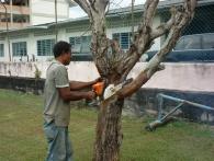 Garden Work 04